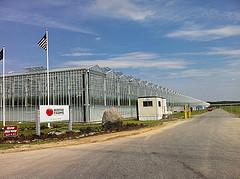 backyard farms greenhouse