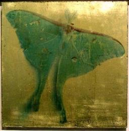 Luna Moth, photograph on 22 karat gold leaf panel, 2003