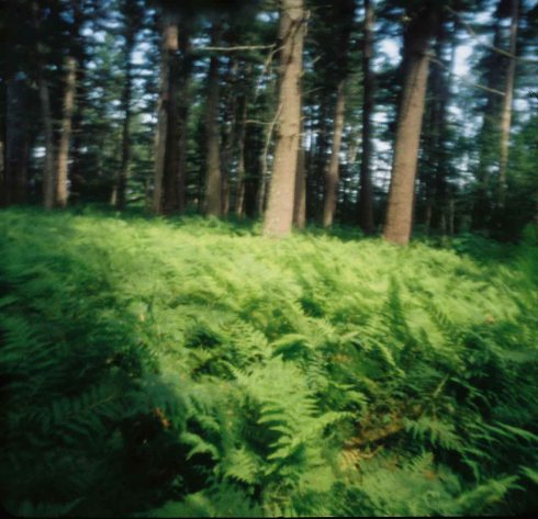A Pinhole Camera image captured with a Holga 120 pinhole camera.